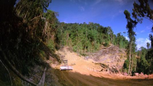 热带雨林被过渡砍伐